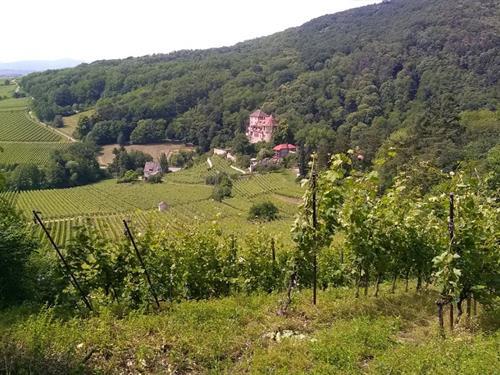Visite de Bergheim et dégustation vins et fromages