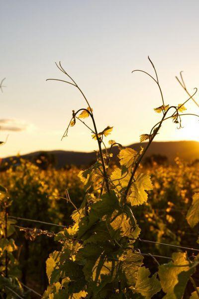 Visites au domaine Jean Huttard - Balade dans le vignoble en segway