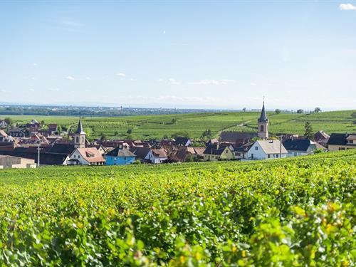 Visites commentées du Sentier viticole des Grands Crus : Cave vinicole / Au Château de Beblenheim