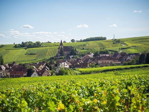 Visites commentées du Sentier viticole des Grands Crus : Domaine Fernand ZIEGLER & Fils