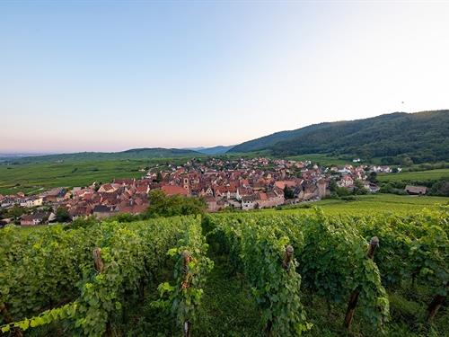 Visites commentées du Sentier viticole des Grands Crus :Domaine de la Tour Blanche