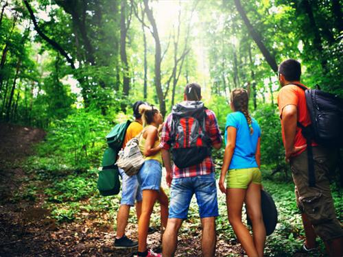 Sylvothérapie : Sorties bien-être en forêt