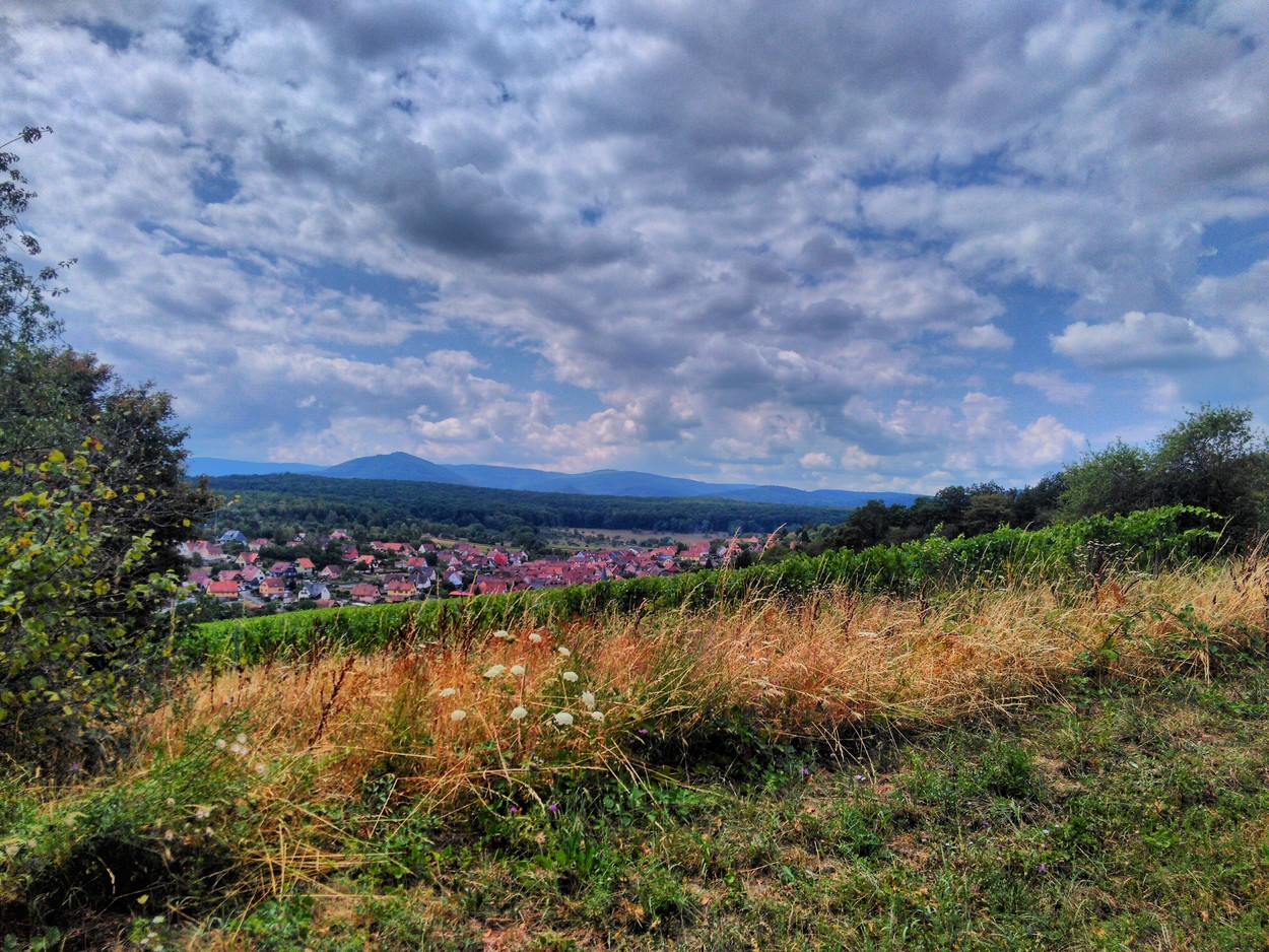 """From Hills to Vineyards"" (""De collines en vignoble"") - Discovery Trail"