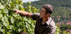 Vins Christophe Maetz