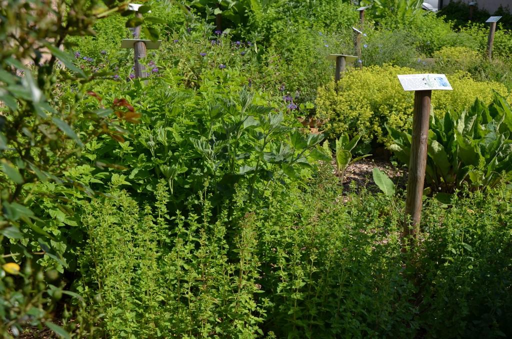 Der mittelalterliche Garten