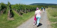 16ème Sentiers Gastronomiques du Bischenberg