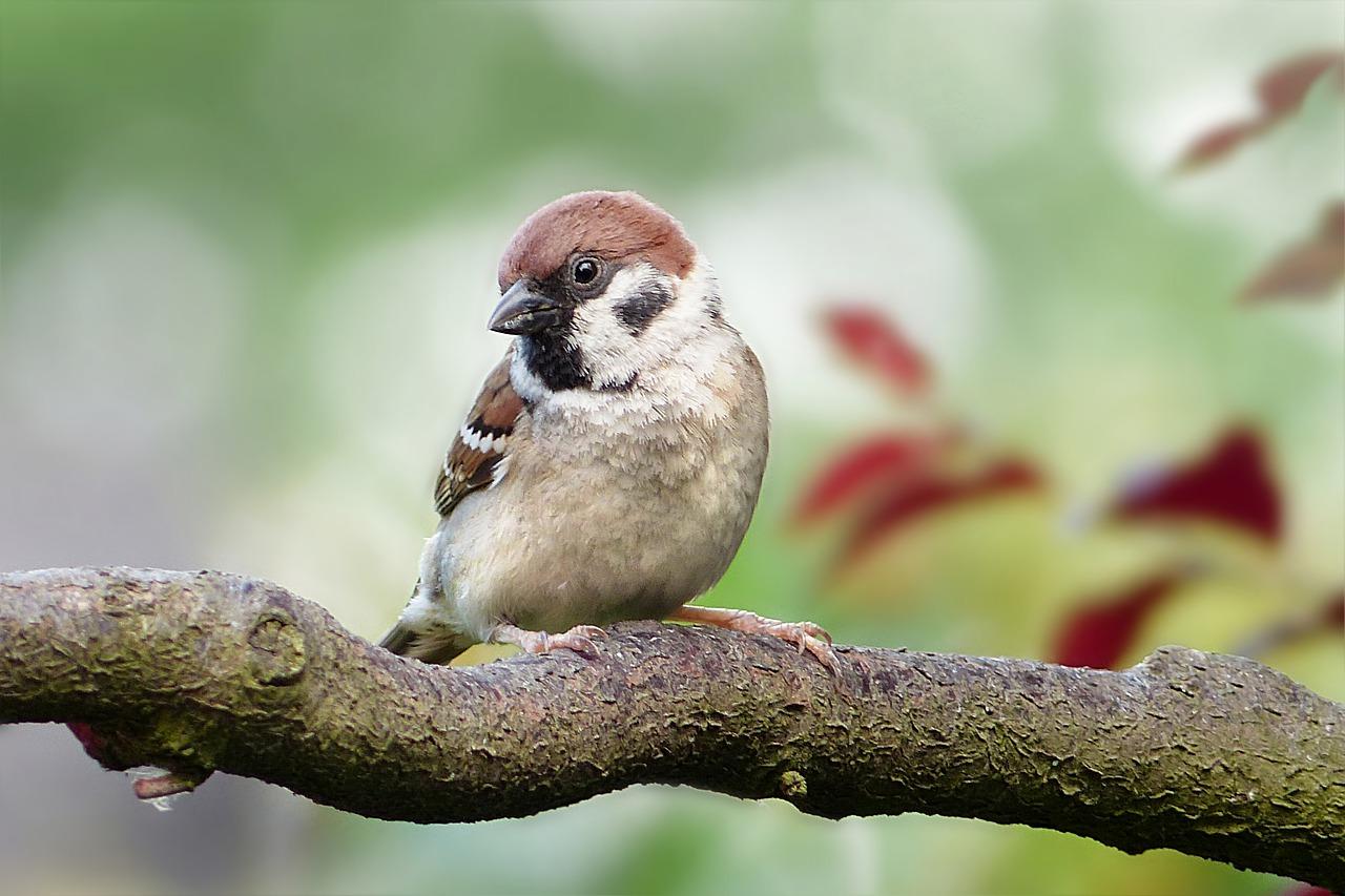 Balade commentée - A l'écoute des oiseaux - Grendelbruch