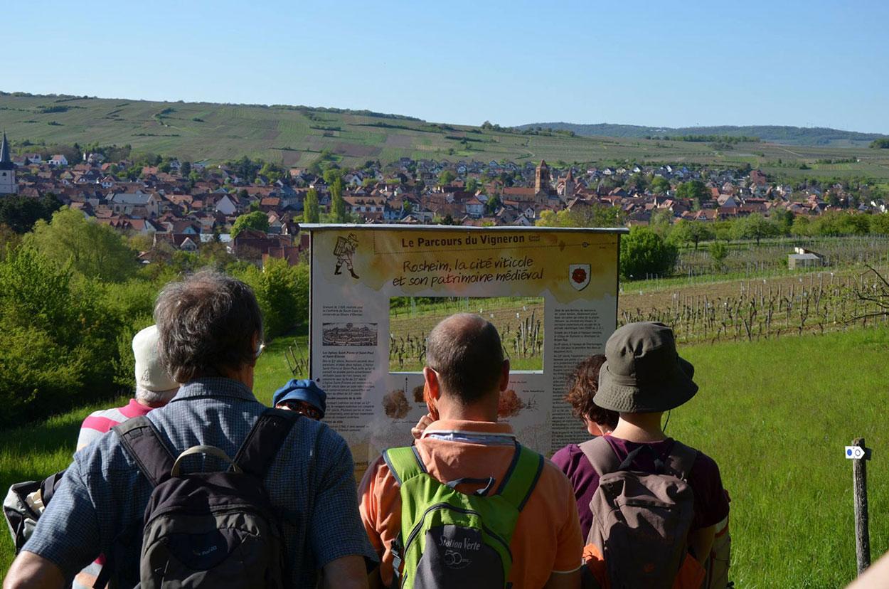 Le parcours du vigneron rosheim - Office du tourisme alsace ...