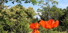Jardin botanique du col de Saverne