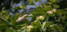 Atelier confitures et valorisation des fruits