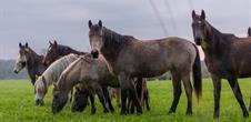 La Plaine du Rhin à cheval