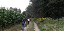 Sentier pédestre : Circuit du Fronberg