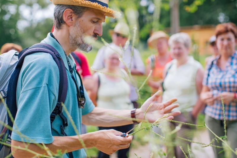 Alsace Écotourisme – Les sensations oubliées des plantes sauvages