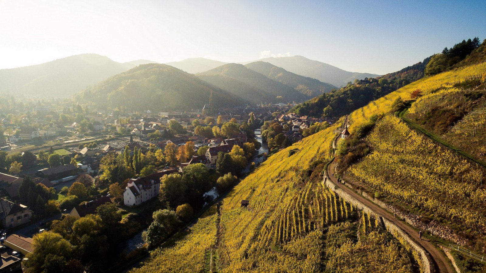 The Rangen wine Path