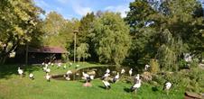 Le parc à cigognes