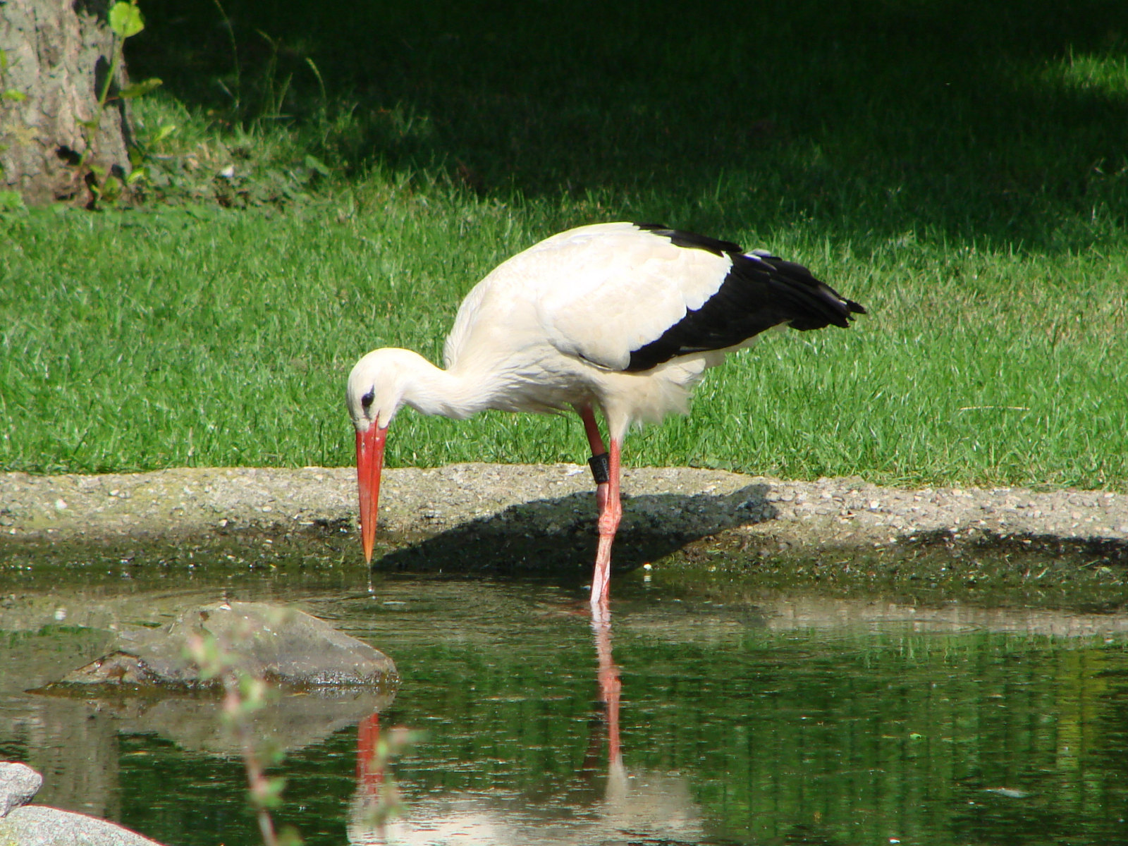 Stork park