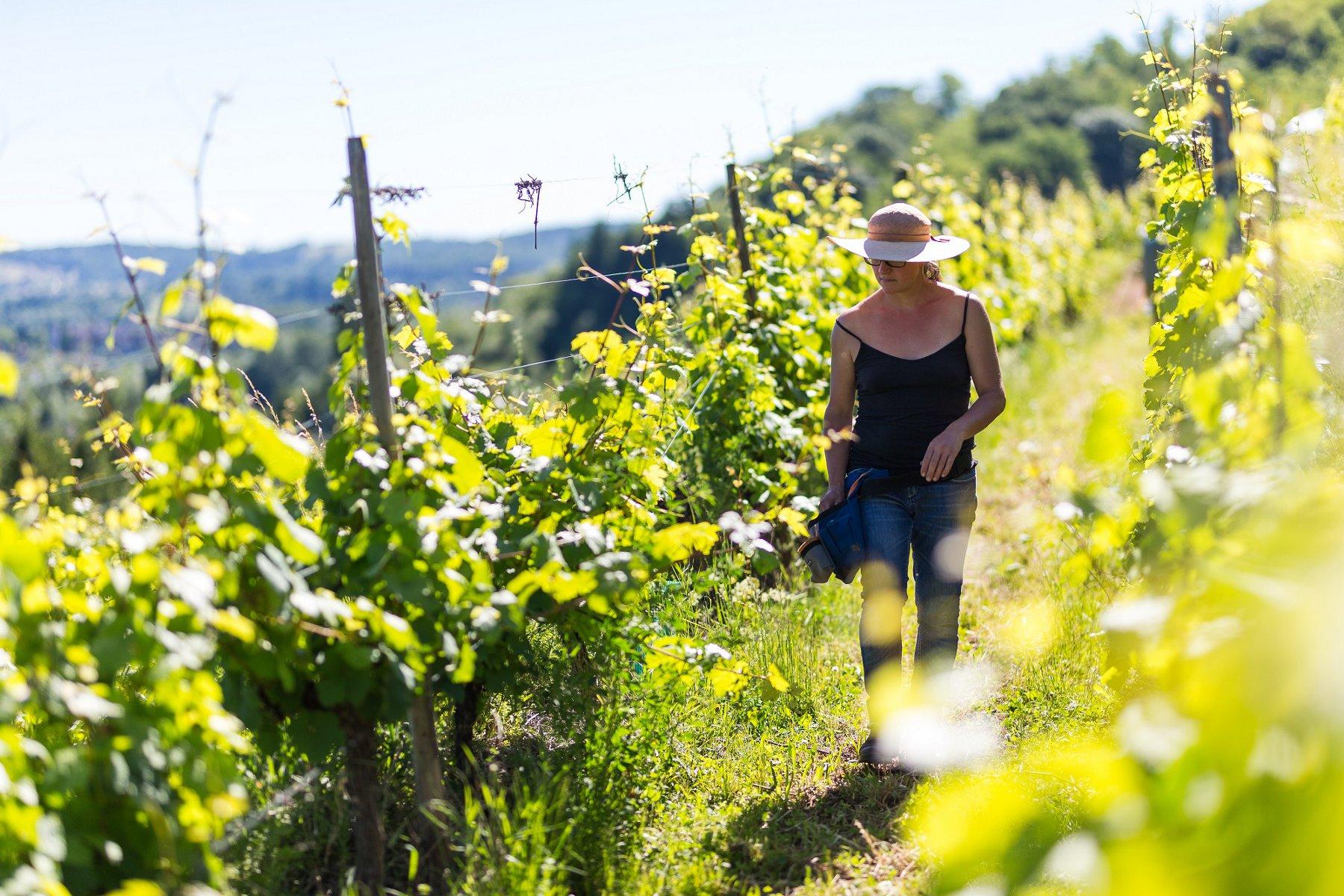 The Côte 425 wine path