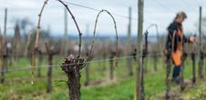 The Coteaux du Vieil-Armand wine path