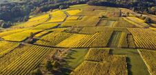 Wine trail of the Coteaux du Vieil-Armand in Uffholtz