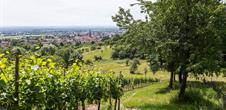 Balade découverte : le sentier viticole