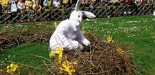 Arrivée du lièvre de Pâques