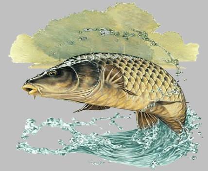 Matinée de pêche