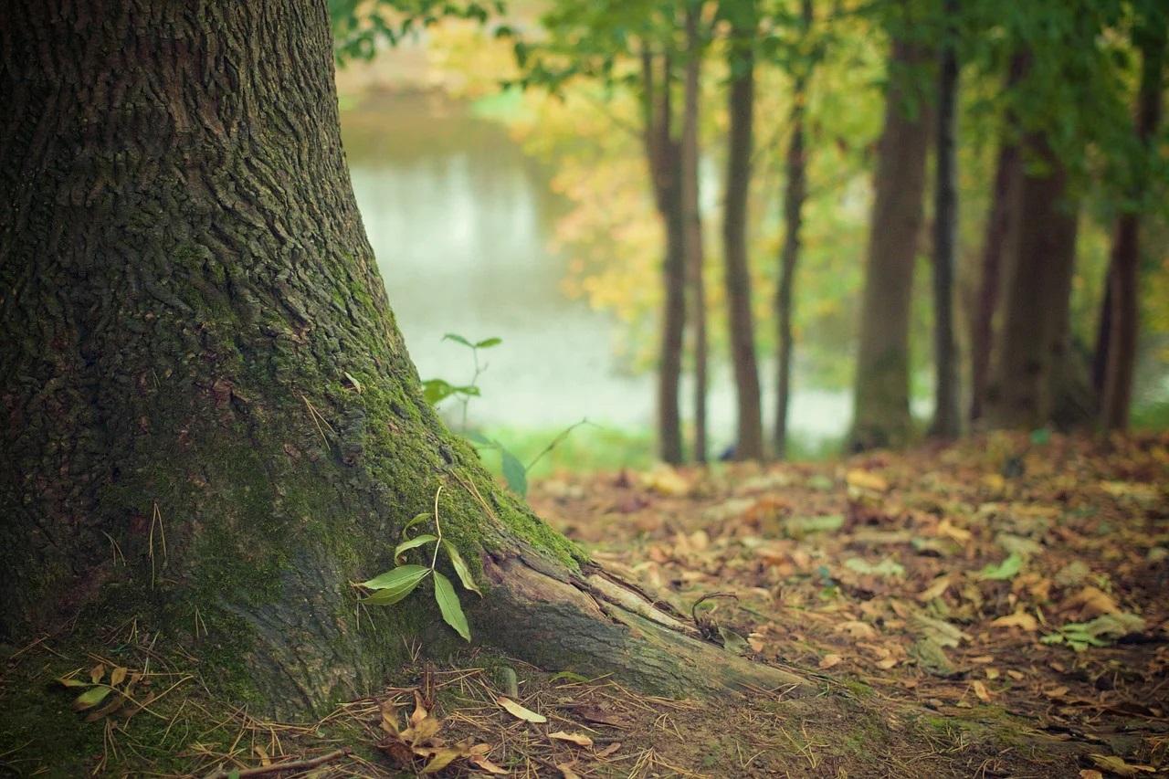 Sortie œcuménique écologie